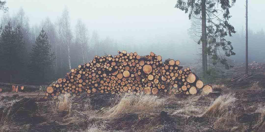 The Sad Trees